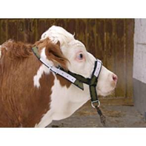 Licol pour vache en trévira