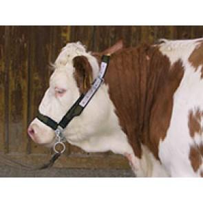 Licol pour vaches en Trévira  avec chaîn