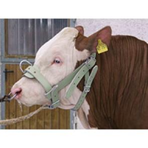 Licol pour taureaux