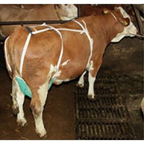 Filet de protection pour vache grand modèle